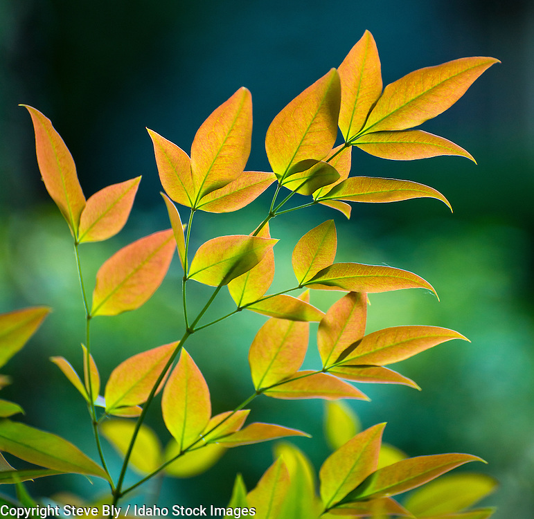 Leaves, Coloroful Spring foilage leaves against a green floral background, USA