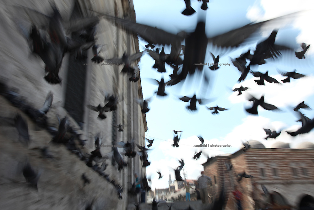 Pigeons in central Istanbul