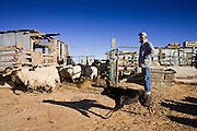 22 OCTOBER 2007 -- COYOTE CANYON, NM: MARK TSOSIE, 78 years old, a member of the Navajo Nation, release his sheep from their pens near his home. Tsosie's family is one of many on the Navajo reservation that doesn't have a reliable supply of potable water. He has been hauling water all his life. He started working for the railroad when he was 14 years old. His job was to haul water to the workers. Now retired and he's still hauling water except now he hauls it to his home and livestock. More than 30 percent of the homes on the Navajo Nation, about the size of West Virginia and the largest Indian reservation in the US, don't have indoor plumbing or a regular supply of domestic water. Many of these homes have to either buy water from commercial vendors or haul water from public wells. A Federal study showed that the total cost of hauling water was about $113 per 1,000 gallons. A Phoenix household, in comparison, pays just $5 a month for up to 7,400 gallons of water. The lack of water on the reservation means the Navajo are among the most miserly users of water in the United States. Families that have to buy or haul water use only about 15 gallons of water per day per person. In Phoenix, by comparison, the average water use is about 170 gallons per day.  Photo by Jack Kurtz