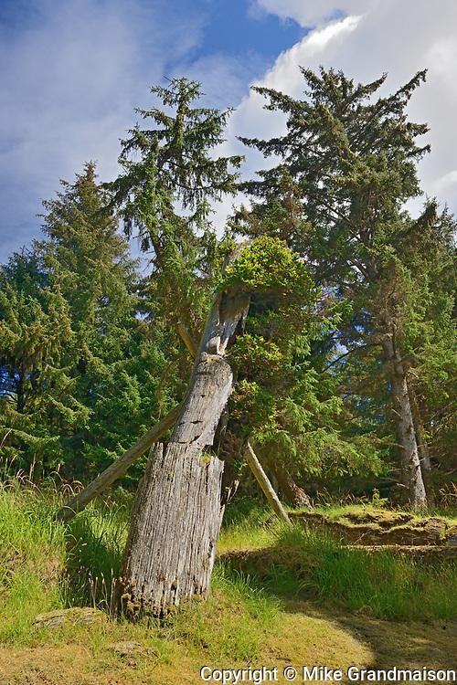Old Haida  totems poles at Skedans Village. Louise Island. , Haida Gwaii (formerly the Queen Charlotte Islands), British Columbia, Canada