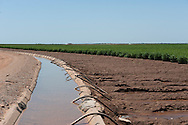 Cotton research being done by Oklahoma State University. Research being done at the Southwest Research Center in Altus.