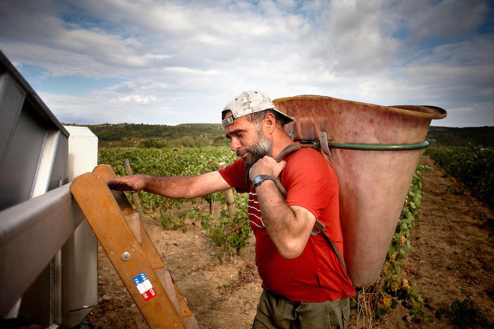 21/09/09 PAZIOLS (FRANCIA). Aurelio Hinojosa empezó a trabajar en el campo a los siete años. .Ahora tiene 53 y la espalda curtida de soportar el peso de la cubeta cargada de uvas, que una vez llena vaciará en el remolque del tractor. Poco a poco, va relevando este trabajo, reservado a los hombres más fuertes de la cuadrilla, a su hijo Aurelio, que tiene 26 años. .FOTOGRAFIA: TONI VILCHES.