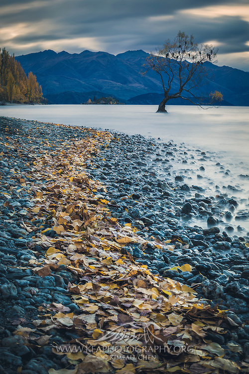 &quot;Pursue some path, however narrow and crooked, in which you can walk with love and reverence.&quot; ~ Henry David Thoreau<br /> <br /> At the end of a golden trail of autumn leaves lies a golden willow tree, along the shores of Lake Wanaka, Central Otago.