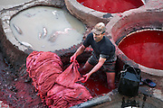 High angle view of worker in dye pit, Chouara Tannery, Fez, Morocco, pictured on February 25, 2009 in the evening. The Chouara tannery is the largest of the four ancient tanneries in the Medina of Fez where the traditional work of the tanners has remained unchanged since the 14th century. It is composed of numerous dried-earth pits where raw skins are treated, pounded, scraped and dyed. Tanners work in vats filled with various coloured liquid dyes derived from plant sources. Colours change every two weeks, poppy flower for red, mint for green, indigo for blue, chedar tree for brown and saffron for yellow. Fez, Morocco's second largest city, and one of the four imperial cities, was founded in 789 by Idris I on the banks of the River Fez. The oldest university in the world is here and the city is still the Moroccan cultural and spiritual centre. Fez has three sectors: the oldest part, the walled city of Fes-el-Bali, houses Morocco's largest medina and is a UNESCO World Heritage Site;  Fes-el-Jedid was founded in 1244 as a new capital by the Merenid dynasty, and contains the Mellah, or Jewish quarter; Ville Nouvelle was built by the French who took over most of Morocco in 1912 and transferred the capital to Rabat. Picture by Manuel Cohen.