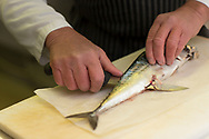 Showing how to Fillet an English Mackerel