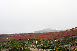 General view of Anacapa Island with Western gulls and light station, Channel Islands National Park, California, United States of America