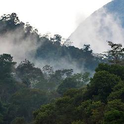 Copa das árvores da Rebio de Duas Bocas, em Cariacica-ES