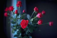 November 1991, Amsterdam, Netherlands --- A bouquet of red roses rests in a vase.  Amsterdam, The Netherlands. --- Image by © Owen Franken/CORBIS