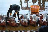 201101 Japan, Kesennuma shark fishing