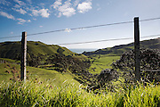 wide view of rolling hills, green fields and trees in the volcanic crater make up this rural new zealand scene at Awhitu in the Auckand Region