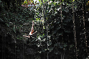 Sinkhole cliff diving competition held in Mexico<br /> <br /> Daredevil athletes have jumped from the edge of a 90ft deep sinkhole in a remote part of Mexico, as part of a cliff diving contest.<br /> Divers in the 'Cliff Diving World Series' performed stunts and reached speeds of 40mph before hitting the dark water of Cenote Ik Kil.<br /> Gary Hunt, from Southampton was the overall winner and managed to pull off a Triple Quad – one of the most difficult dives in the world.<br /> The Red Bull event lasted for two days -- though most of that time was probably taken up trying to get back out after each jump. <br /> Gary scored 373.85 and edged out second-placed Silchenko by a little over 10 points, with 2009 champion Duque taking third place.<br /> <br /> Photo Shows: Orlando Duque of Colombia dives from the 27.2 metre platform during round two of the 2010 Red Bull Cliff Diving World Series, Cenote Ik Kil, Yucatan, Mexico on June 05; 2010.<br /> (©Ray Demski/Exclusivepix)