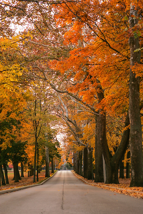 Oct. 27, 2004; Saint Mary's College Avenue in fall<br /> <br /> Photo by Matt Cashore