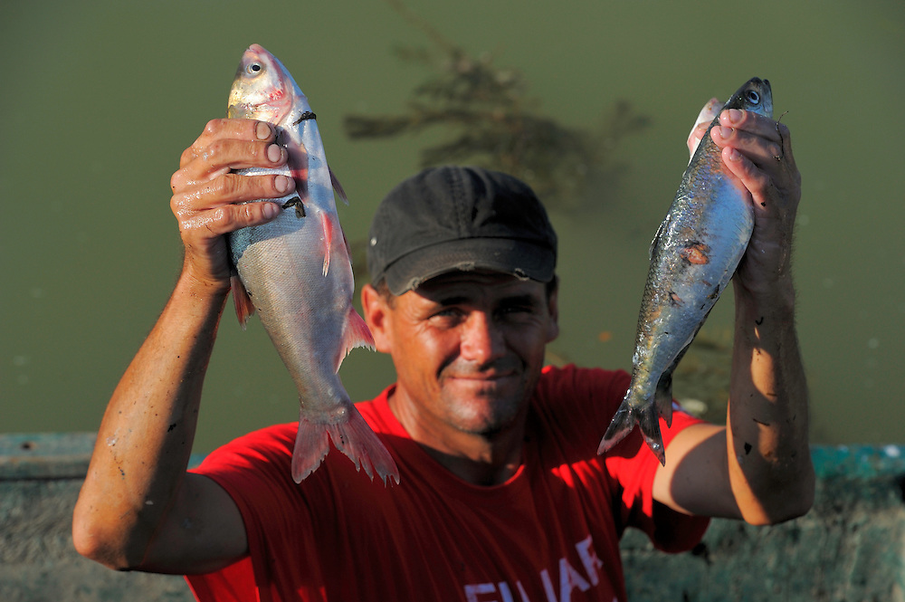 Fish catch in Sfinthu Gheorghe - Pontic shad/Danube mackerel Alosa pontica and Chinese grass carp (left), Danube delta rewilding area, Romania