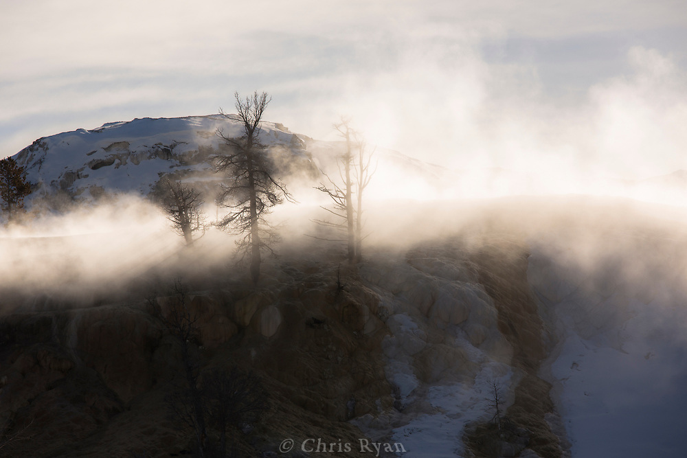 Light streaming through trees shrouded by the steam from the Mammoth Hot Springs, Yellowstone National Park