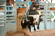 26 NOVEMBER 2011 - CHANDLER, AZ:    ERIC MONTES competes in bullriding at the Grand Canyon Pro Rodeo Association (GCPRA) Finals at Rawhide Western Town in west Chandler, AZ, about 20 miles from Phoenix Saturday. The GCPRA Finals is the last rodeo of the GCPRA season. The GCPRA is a professional rodeo association based in Arizona.     PHOTO BY JACK KURTZ