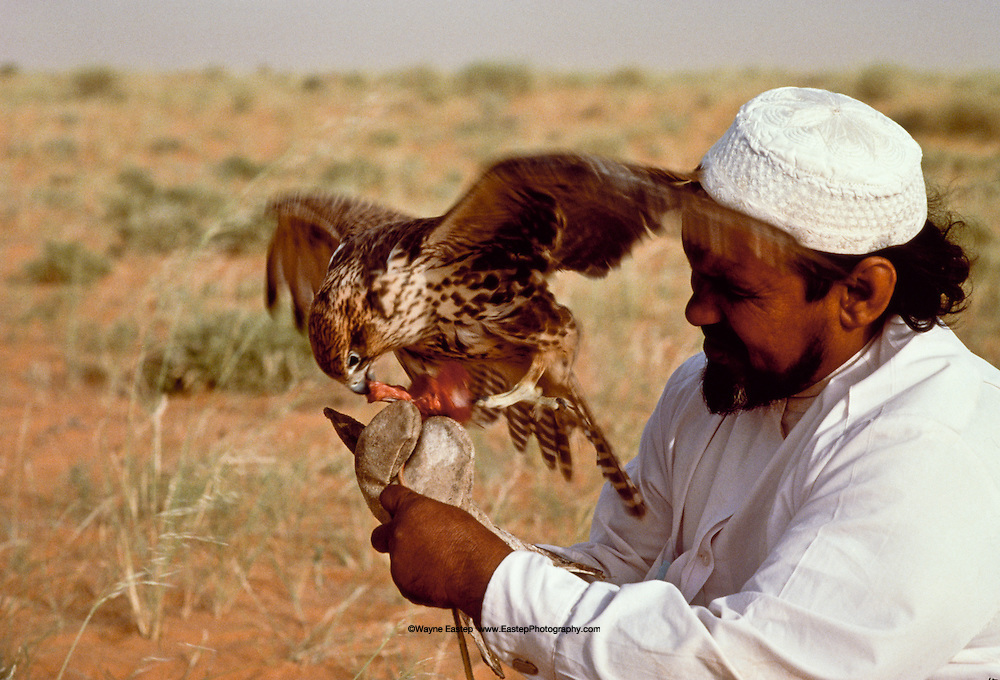 Misfer bin Mohammed Al Murrah, with his falcon.  The Bedouin capture migrating falcons in the fall and train them to hunt rabbits and fowl. Dahana Sands, Saudi Arabia