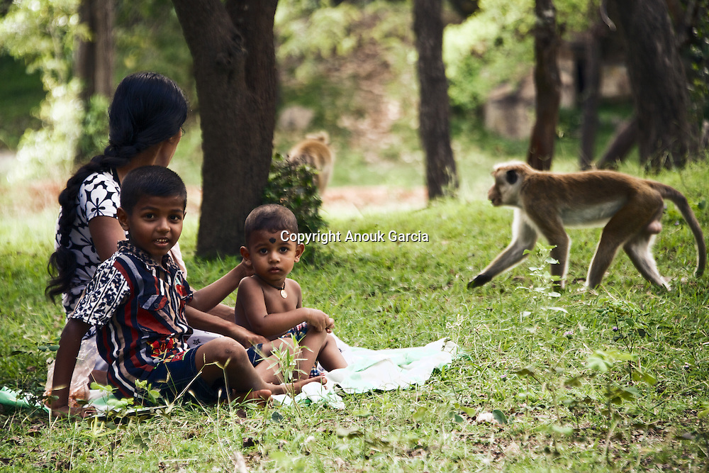 Picnic with Monkeys