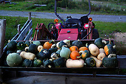 Farm tractor with a load of squash