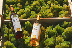 Vendange vin paille