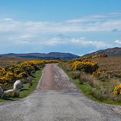 Ovelhas na estrada (registro) fotografado na Escócia, na Europa. Registro feito em 2019.<br /> ⠀<br /> ⠀<br /> <br /> <br /> <br /> <br /> ENGLISH: Sheep on the road photographed in Scotland, in Europe. Picture made in 2019.