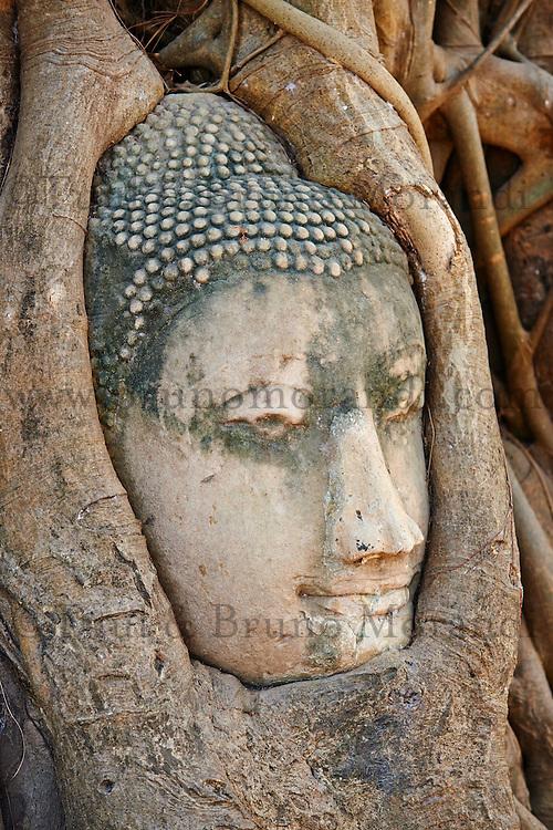 Thailande, province de Phra Nakhon Si Ayutthaya, Ayutthaya, Parc Historique, Wat Mahatat, tete de bouddha dans les racines d un ficus seculaire // Thailand, Ayutthaya, Ayutthaya Historical Park, Wat Mahatat, stone Buddha head sits entwined in the roots of a fig tree