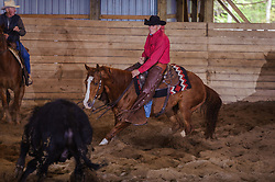 May 20, 2017 - Minshall Farm Cutting 3, held at Minshall Farms, Hillsburgh Ontario. The event was put on by the Ontario Cutting Horse Association. Riding in the 2,000 Limited Rider Class is David Hamilton on Cat Powered owned by the rider.