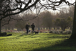 © Licensed to London News Pictures. 31/12/2015. London, UK. Dog walkers enjoy the sunshine in Bushy Park. Photo credit: Peter Macdiarmid/LNP