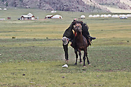 Mongolia. Rodeo. Yak festival in Tariat sum area  arkangai  Mongolia  /Rodeo . nadaam (fette) des yaks dans region de Tariat sum  arkangai  Mongolie