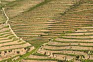 Symington Family Estates - Quinta do Vesúvio vineyards