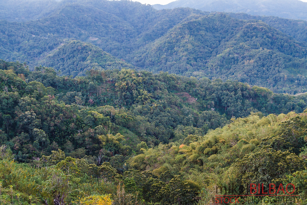 Mountains and forest. Flores island.  Indonesia, Asia.