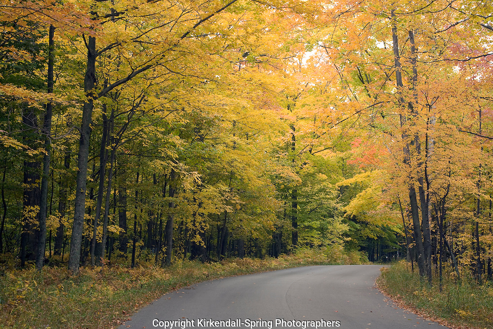 WI00104-00...WISCONSIN - Autumn color along a forested road in Peninsula State Park in Door County.