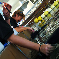 Manatee research trainers Kim Dziuk, left, and Adrienne Cardwell, center, feed beets and carrots to manatee half-brothers Hugh and Buffett at Mote Marine Laboratory in Sarasota, Fla., on Wednesday, August 23, 2006.  (PHOTO/CHIP LITHERLAND)