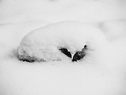 Small deer skull in the snowy woods