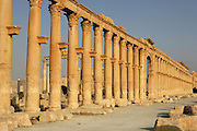 Great Colonnade, along the Cardo Maximus or main street, 1.2 kms in length with porticoes at each end, 2nd century AD, Palmyra, Syria. In Roman city-planning, the Cardo Maximus runs north-south, intersecting with the east-west Decumanus Maximus Picture by Manuel Cohen