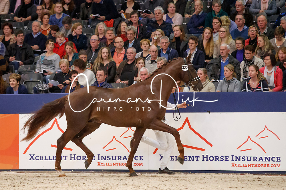 322, Killimanjaro<br /> KWPN Stallionshow - 's Hertogenbosch 2018<br /> © Hippo Foto - Dirk Caremans<br /> 02/02/2018