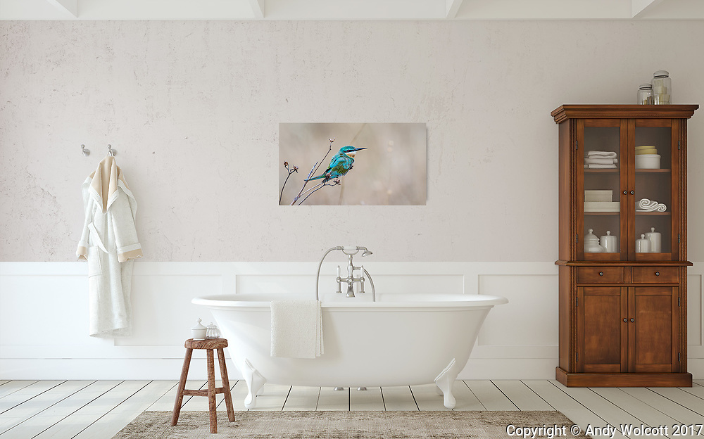 Room Display<br /> Image: 20 X 40 canvas<br /> Bee-eater, Tanzania, id# 2017 0109 9094<br /> <br /> template by: www.arianafalerni.com