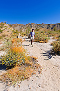 Hiker in the Coyote Mountains, Anza-Borrego Desert State Park, California USA