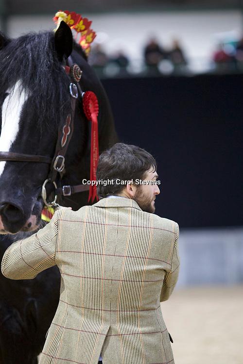 W H Griffith &amp; Sons' TREM-Y-WYDDFA COURAGE  f 2009  (No.111)<br /> Sire  Boothay Richard<br /> Dam  Trem-Y-Wyddfa Rosemary<br /> Winner  Stallions 5 years &amp; upwards
