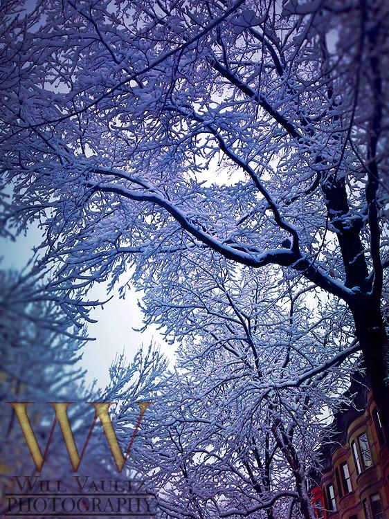 Low angle snowy trees on urban tree lined street
