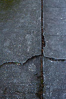Cracked sidewalk and upheaval.