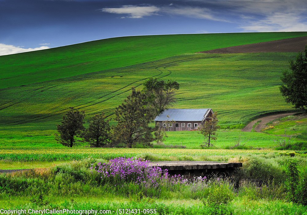 Barn in Palouse region of Washington