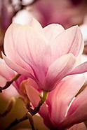 magnificent magnolia calendar
