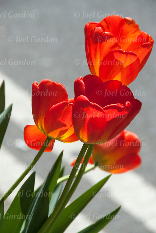 Close up of spring blossoms flora on outdoor window box.<br />