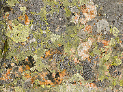 Yellow lichen makes patterns on an alpine rock in Engadine, Switzerland, the Alps, Europe.