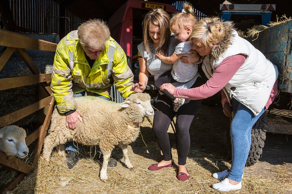 Hartcliffe Community Park farm, Rocky the farm manager give a local family the opportunity to get up close to one of the sheep. Hartcliffe Community Park farm Bristol, UK.