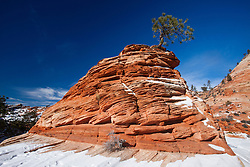 Small pine tree growing from the top of a red sandstone tumulus with snow, Zion plateau, Zion National Park, Utah, United States of America