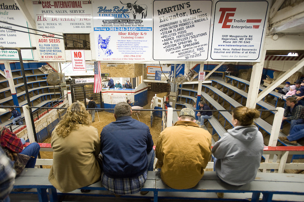 Spectators at the Four States Livestock Auction, Hagerstown Maryland
