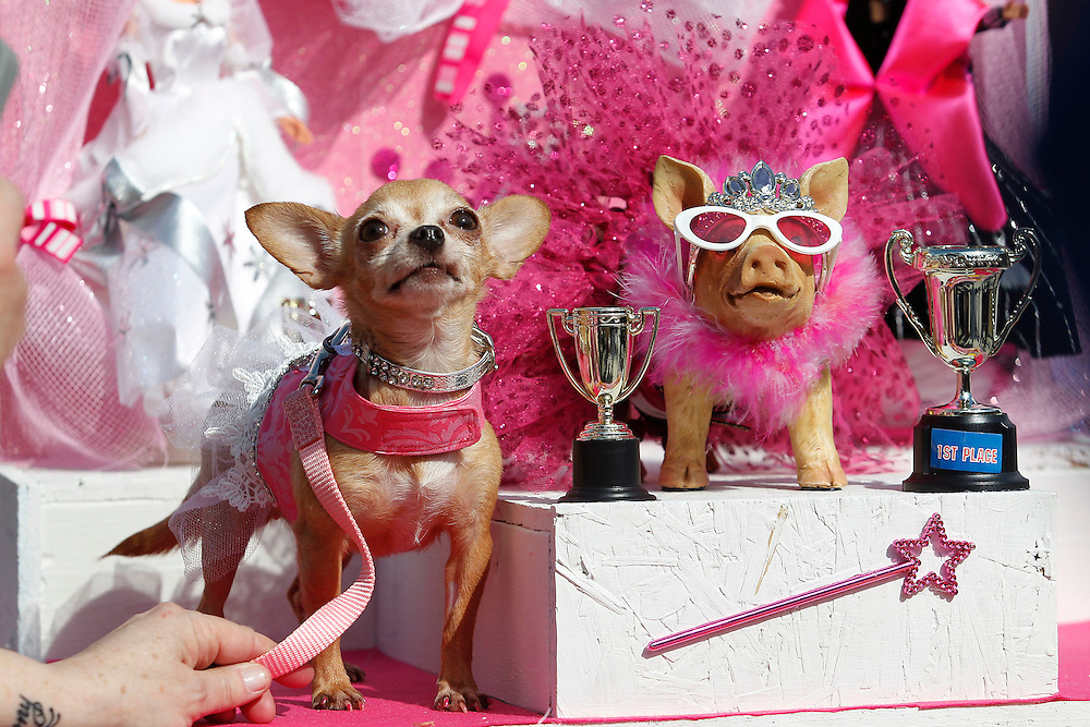 "Dogs and their human companions participate in the Mystic Krewe of Barkus parade in the French Quarter of New Orleans, Louisiana on Sunday, January 27, 2013. This years theme was ""Tails & Tiaras Here Comes Honey Bow Wow."" This is the 18th year the canine oriented parade has taken place."