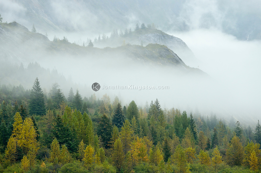 Fog lifts to reveal cliffs and colorful fall foliage in Glacier Bay National Park, Alaska.
