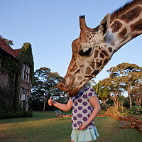 Third place, National Geographic Traveler Photo Contest 2011. Giraffe Manor, Nairobi, Kenya